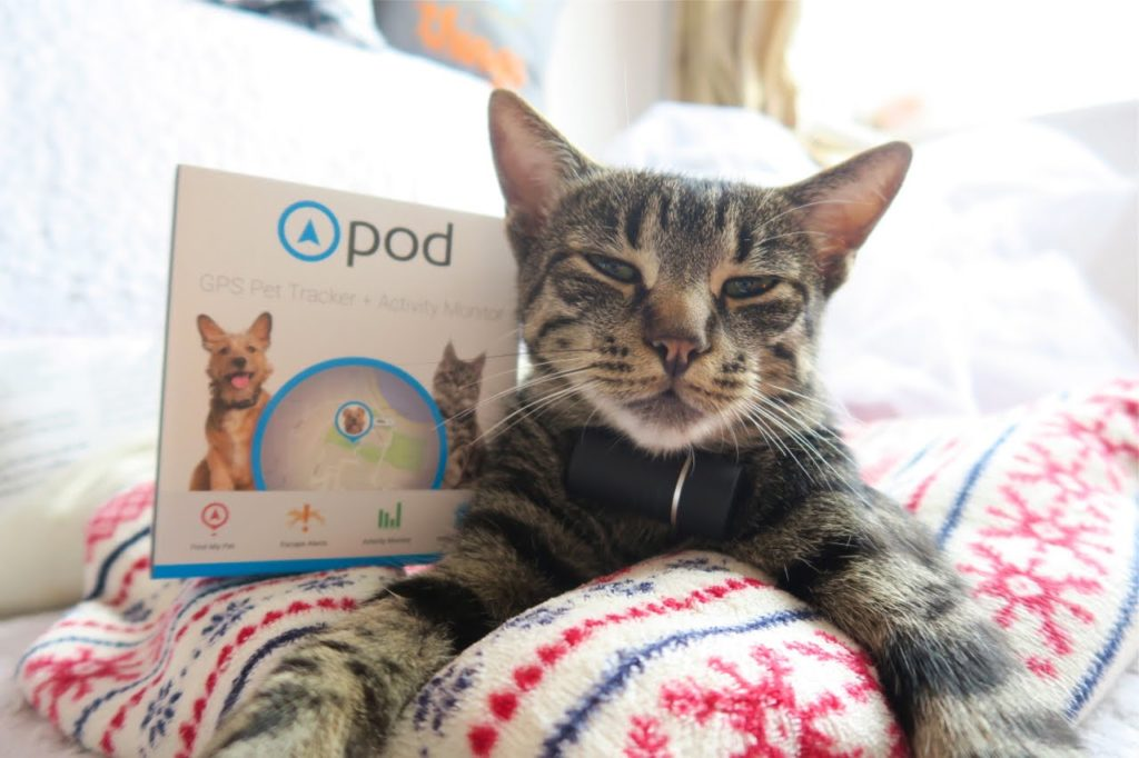 Pod+Tracker+for+your+Pets