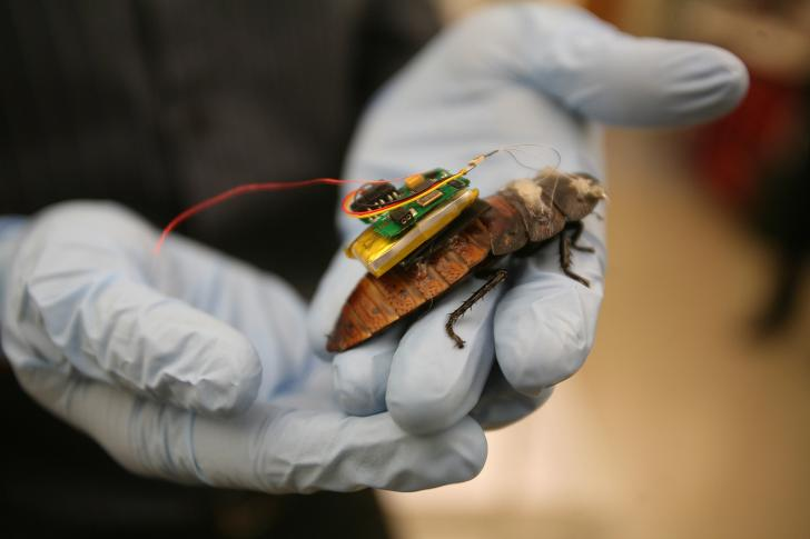 Microcircuit Can Control A Cockroach