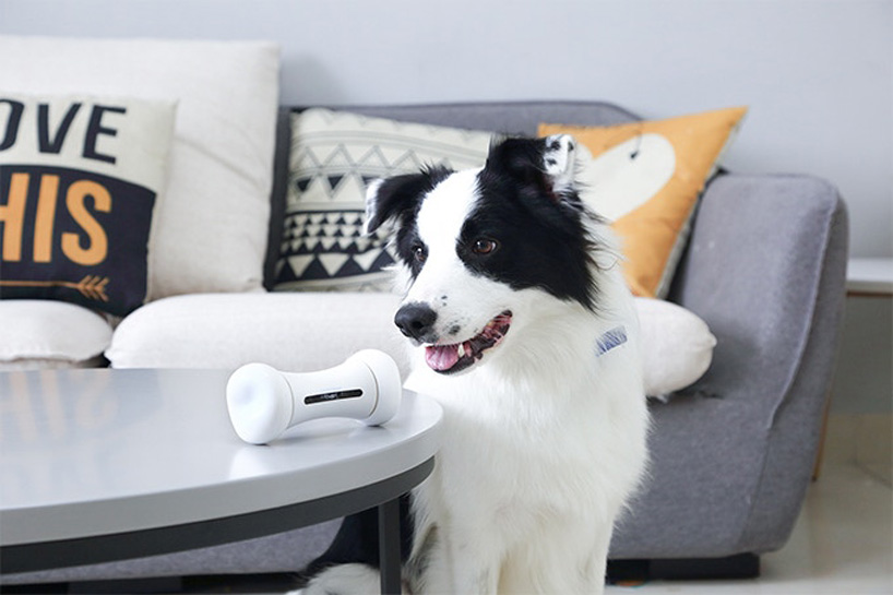 The Interactive Dog Toy