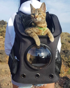 Fat Cat Cat Backpacks