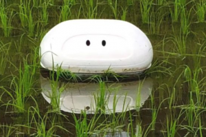 A white, flat vacuum looking robot floats on the shallow water of rice fields.