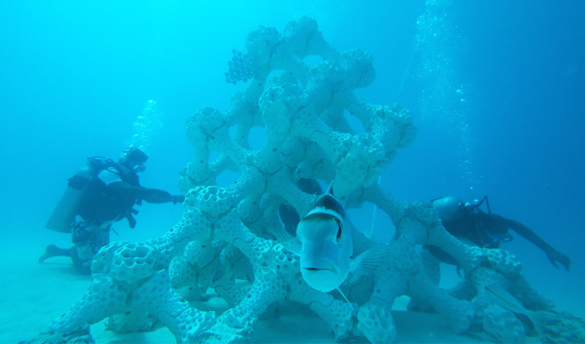 3-D Printing Coral To Help Homeless Fish