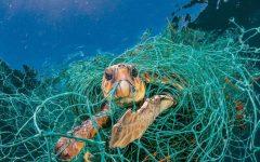 Turtle intertwined in fishnet. Photographer: Jordi Chias