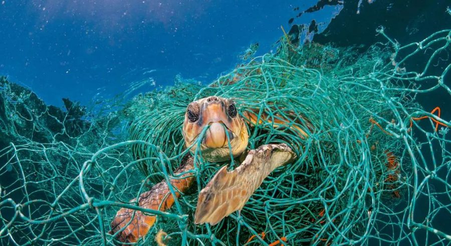 Turtle intertwined in fishnet. Photographer: Jordi Chias