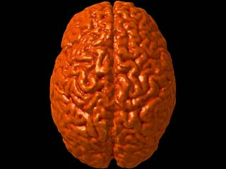Photo of a child brain. Photo Source: Attribution Some rights reserved by IsaacMao flickr.com