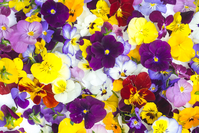 Edible Flowers https://www.thompson-morgan.com/edible-flowers