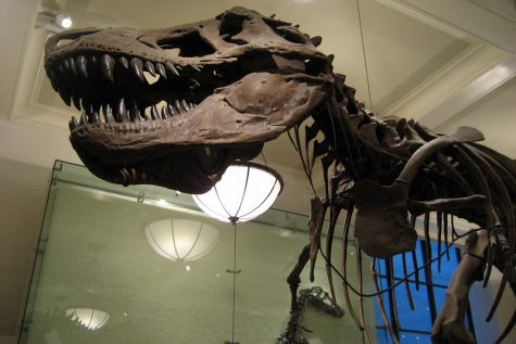 """NYC - AMNH: Hall of Saurischian Dinosaurs - Tyrannosaurus Rex"" by wallyg is licensed under CC BY-NC-ND 2.0"