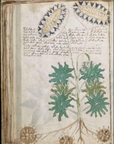 Voynich+Manuscript+2