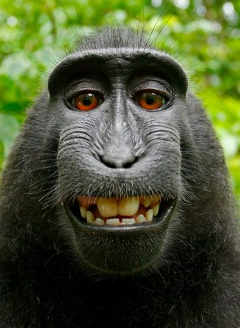 https://www.nbcnews.com/news/us-news/federal-appeals-court-rejects-monkey-selfie-suit-n868501