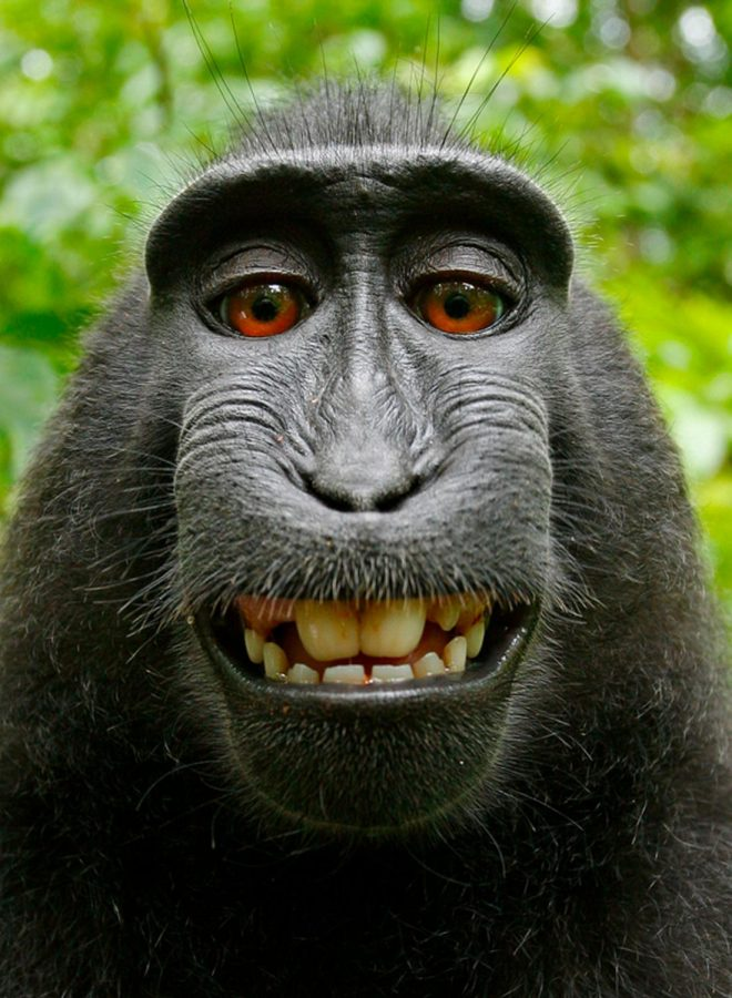 Monkey Selfies and How they Could Have Changed Everything