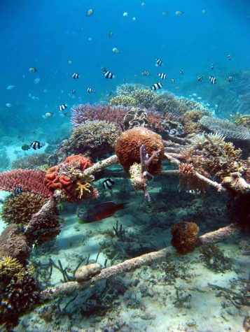 """Biorock Reef Indonesia"" by USFWS Headquarters is licensed with CC BY 2.0. To view a copy of this license, visit https://creativecommons.org/licenses/by/2.0/"