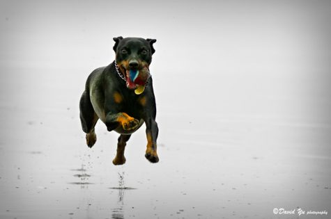 """""""dog"""" by davidyuweb is licensed under CC BY-NC 2.0"""