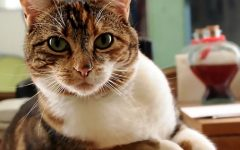 Engineering Breakthrough for Pets